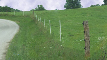 ELECTRIC FENCE FOR CATTLE | ELECTRIC CATTLE FENCE - ZAREBA