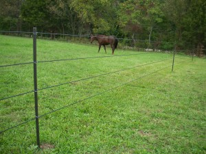 Horse Fence with Black PasturePro Posts