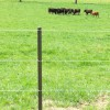 In preparation for their first production sale, Andy and Lydia have built new paddocks and holding lots using PasturePro posts.