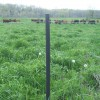 One wire black post
