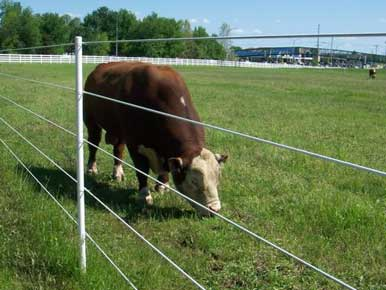 PasturePro Line Post with grazing bull and coated wire